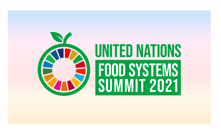 Thumbnail image for United Nations Food Systems Summit
